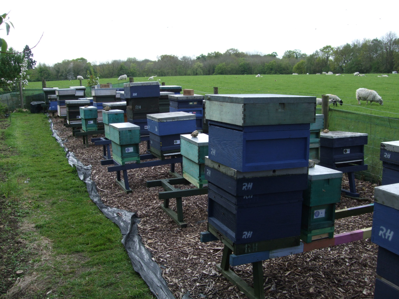 Some of RonHoskins's hives at his apiary at Stanton